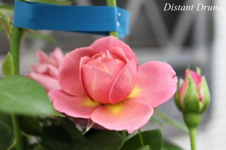 130708-7_convert_20130709013722.jpg