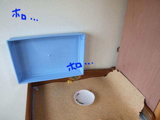 DSCF120524d1021.jpg