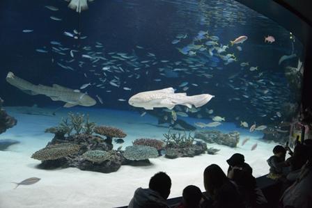 なぜか水族館
