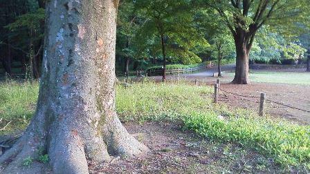 公園 携帯