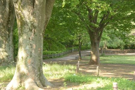 公園 デジカメ
