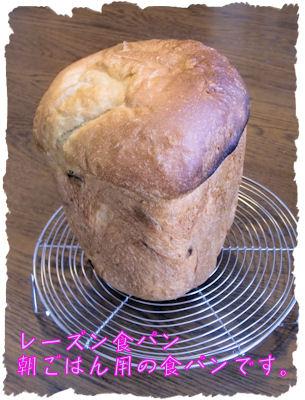 いいできですな~HB食パンです。