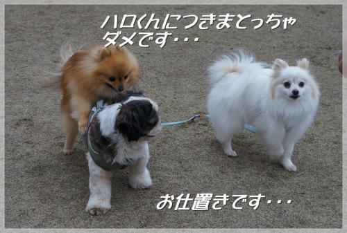 繧ソ繝ォ縺。繧・s繝槭え繝ウ繝・convert_20130321225621