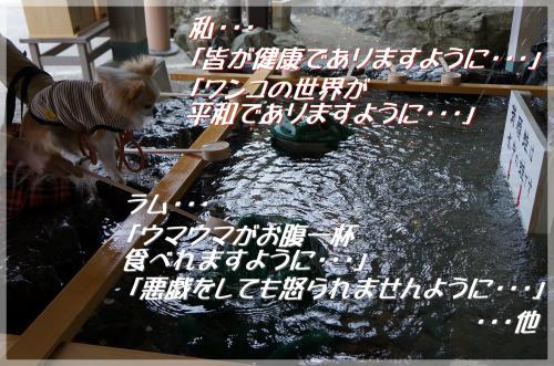DSC05474_convert_20130330191008.jpg
