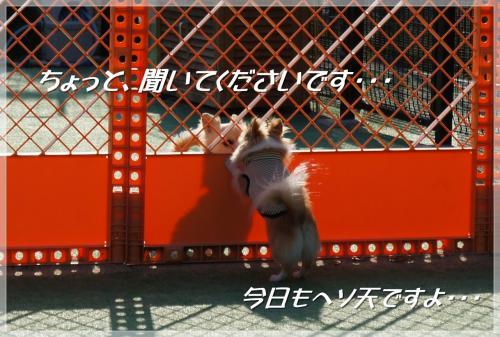 DSC06741_convert_20130502183847.jpg