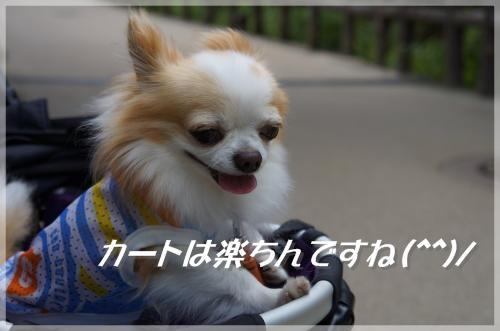 DSC08626_convert_20130630212445_convert_20130630220727.jpg