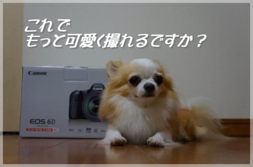 DSC08677_convert_20130630212628.jpg