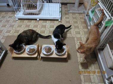 2013.06.03-5 ochibi-trio