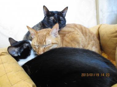 2013.01.19-1 ochibi-trio
