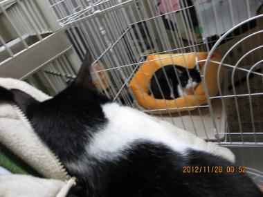 2012.11.28-1 nao & mao