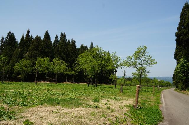 黒沢観光くり園の春