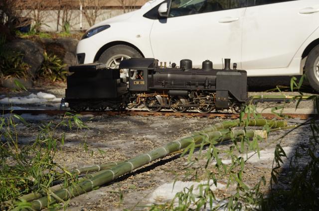 C56 129 と切り倒されたばかりの竹