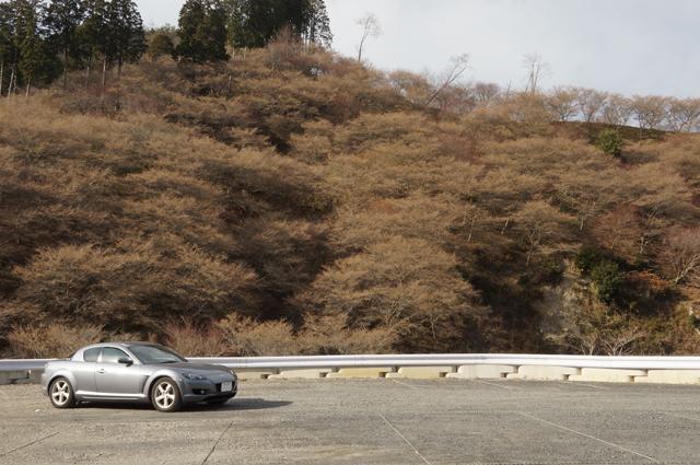 マツダRX-8と四季桜の丘 瑠璃光山