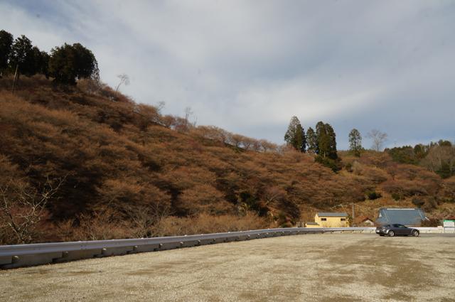 RX-8と四季桜の瑠璃光山