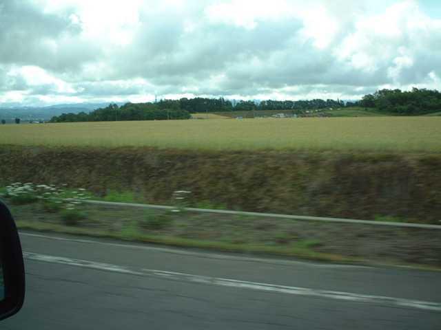 20120710秋蒔き小麦色づき