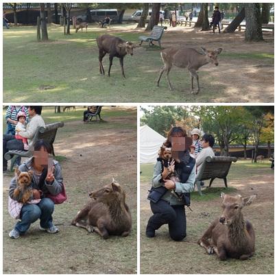 お友達・鹿