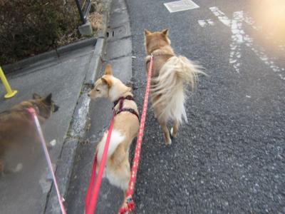 お散歩しめじ