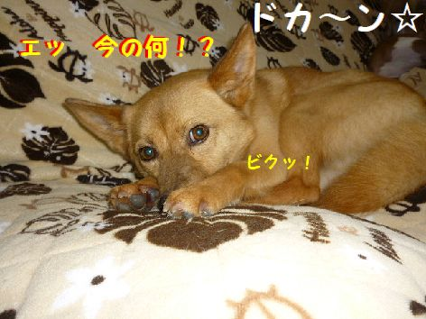 a_20120511071513.jpg