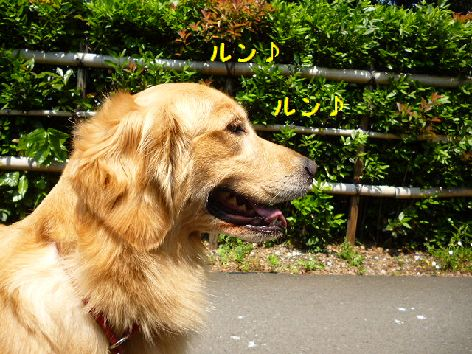 a_20120529073524.jpg