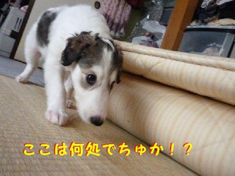 a_20120531071733.jpg