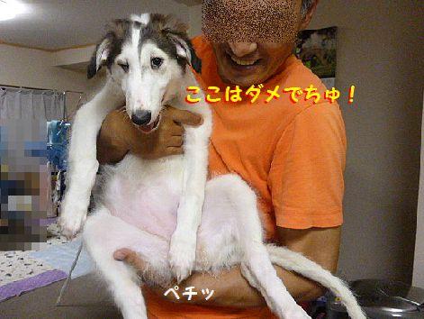 a_20120705072205.jpg