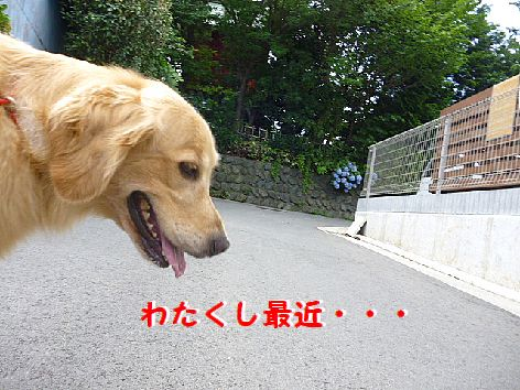a_20120720073651.jpg