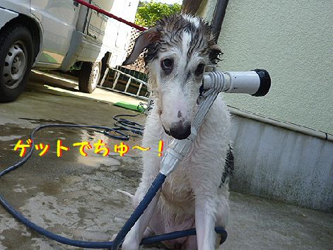 a_20120730072743.jpg