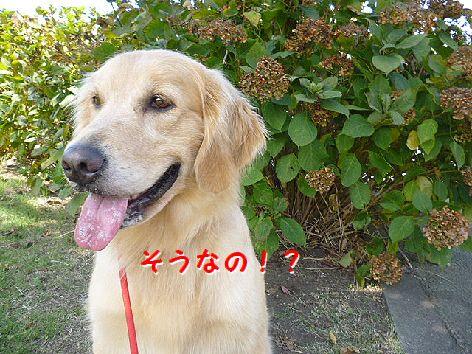 a_20120802073000.jpg