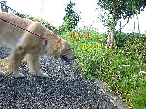 a_20120803073208.jpg