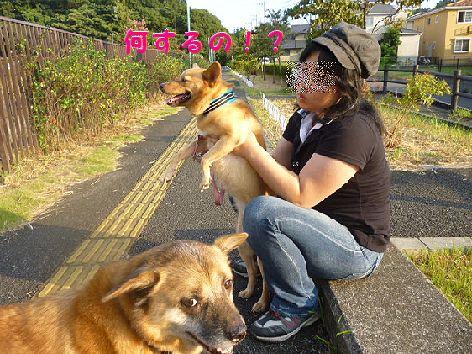 a_20120808073731.jpg
