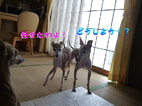 b_20120531071732.jpg