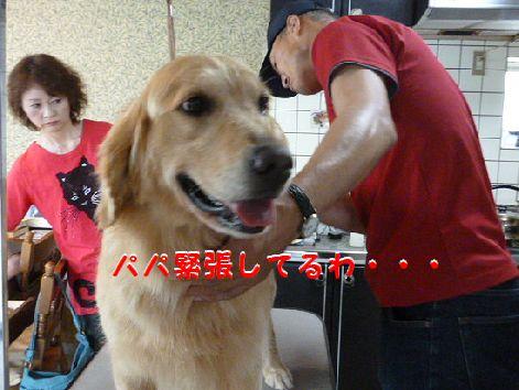 b_20120604071551.jpg