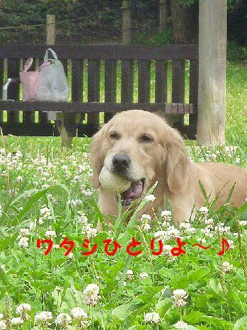 b_20120628072010.jpg