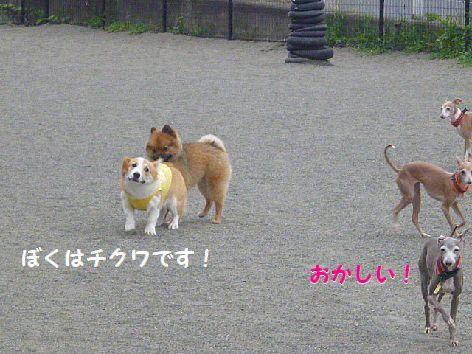 b_20120702072027.jpg