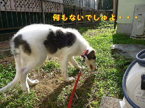 b_20120712073116.jpg