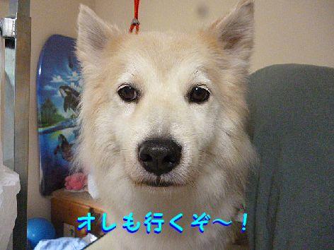 b_20120716115541.jpg