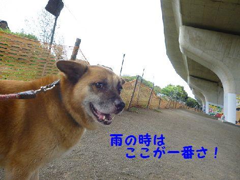 b_20120815073013.jpg