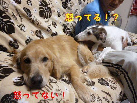 b_20120816074349.jpg