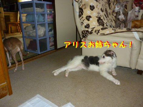 c1_20120623093140.jpg