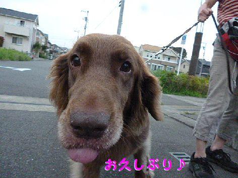 c2_20120705072204.jpg