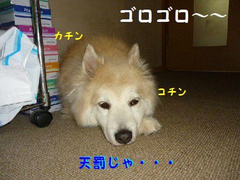 c_20120511071512.jpg