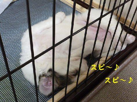 c_20120524065334.jpg