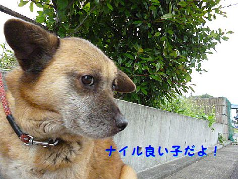 c_20120525070927.jpg