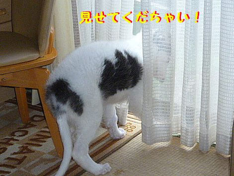 c_20120623093141.jpg