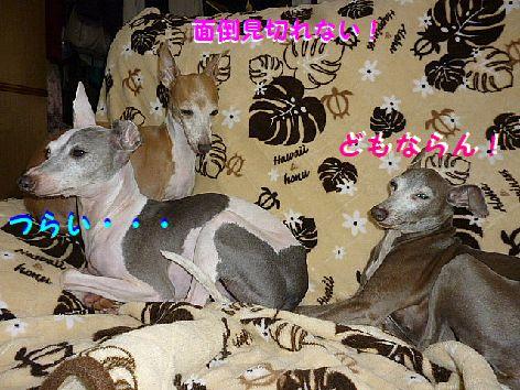 c_20120624124357.jpg
