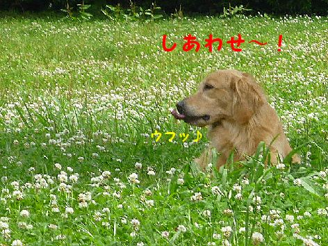 c_20120628072009.jpg