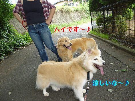 c_20120706073640.jpg