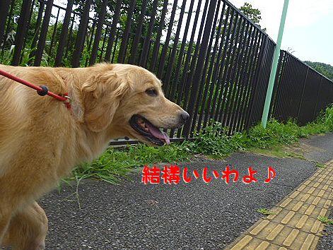 c_20120720073651.jpg