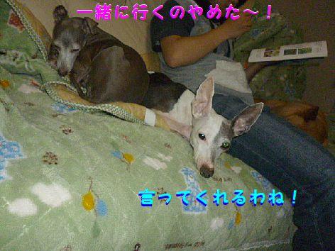 c_20120723073635.jpg