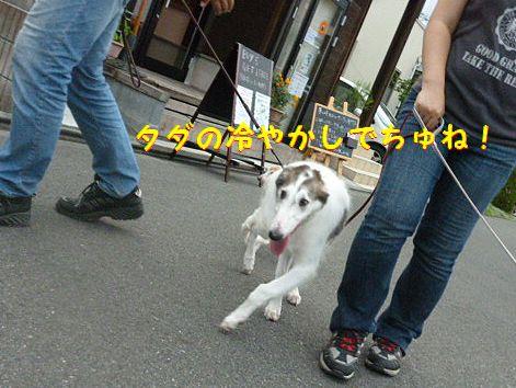 c_20120813072243.jpg